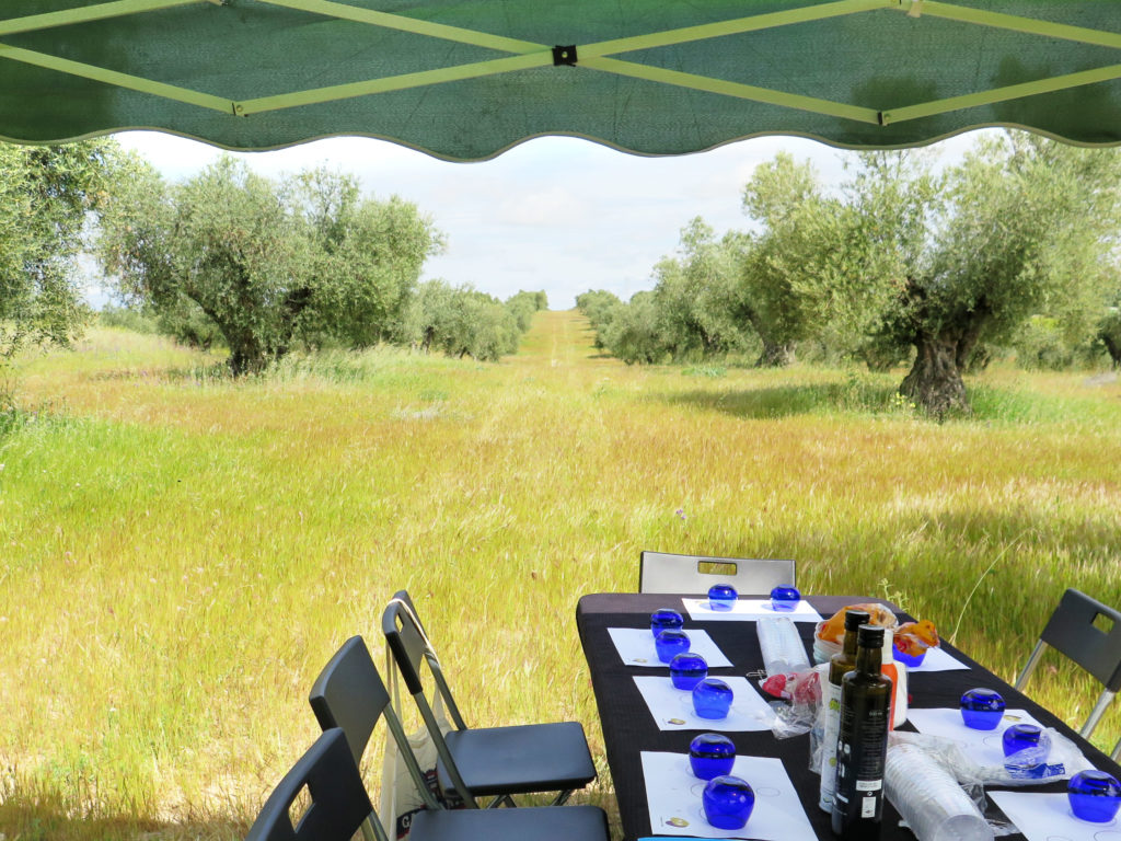 Lunch at the olive grove