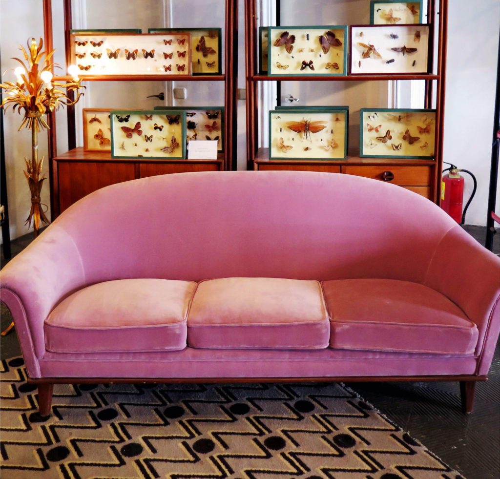 A velvet pink retro sofa and insect taxidermy
