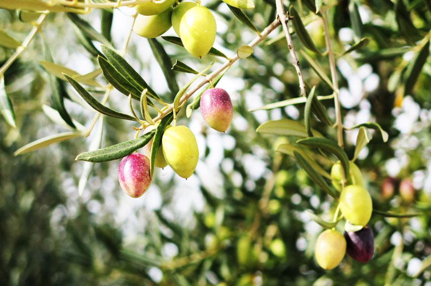 Olives (A5 €8)