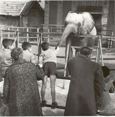 Children feeding the elephant