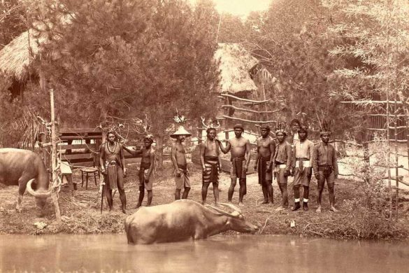 Igorot people and their cattle