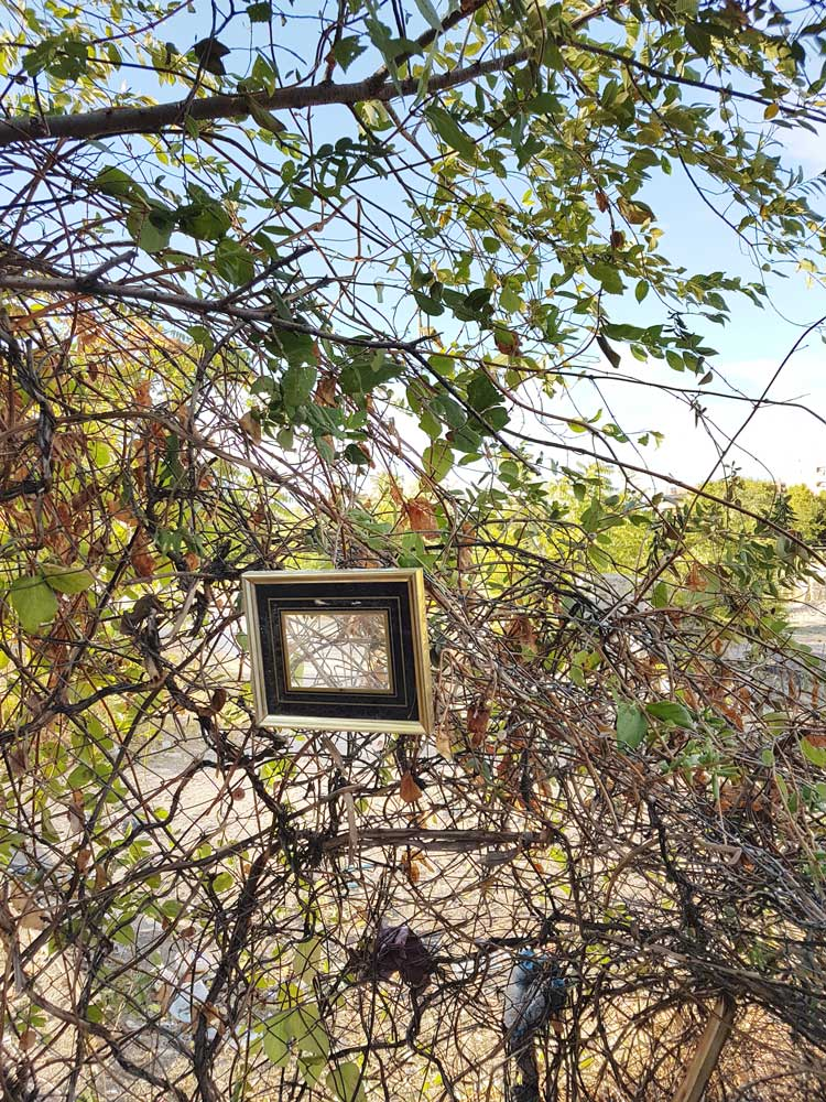 An old picture frame hanging on a bush that was once part of a home