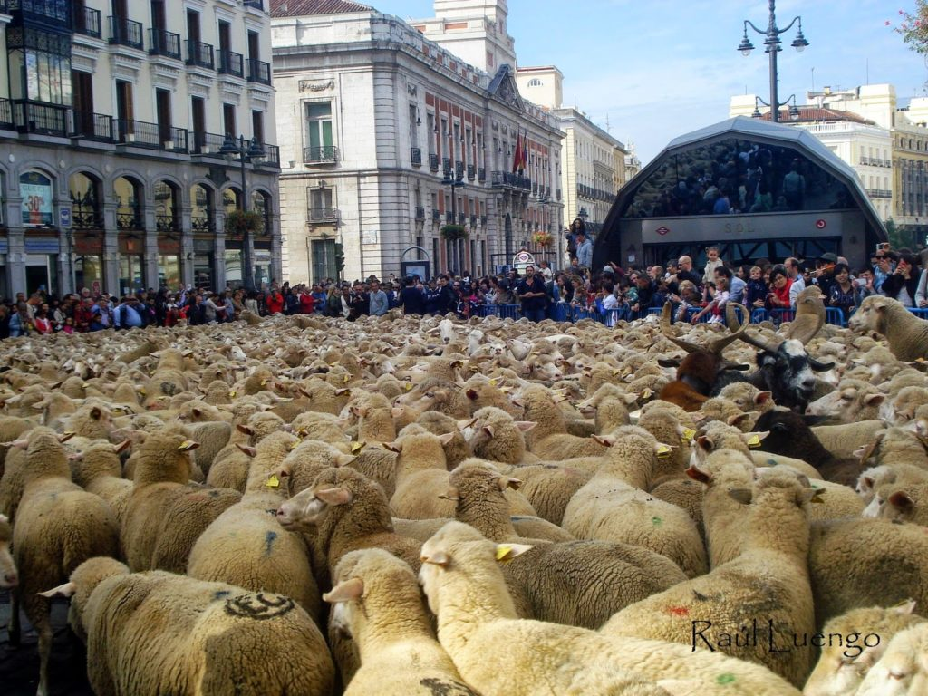 Sheep on Puerta del Sol