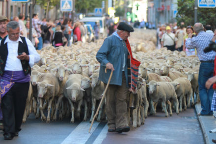 A farmer leading his herd through central Madrid | Planesconhijos