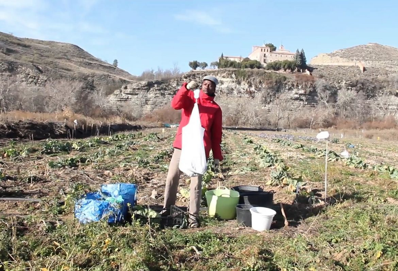 From Mauritania to Lavapiés: meet Usman, the alternative vegetable